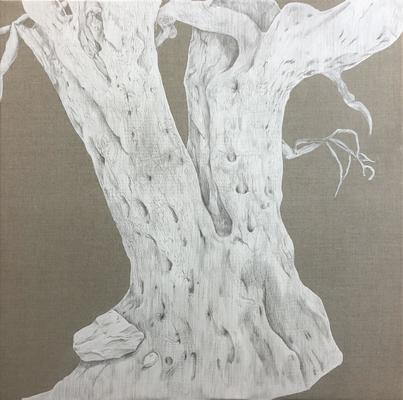 Olive Tres Praneet Soi, Olive Tree IV, 2020, Silverpoint on linen, 80cm x 80cm. From the Prabhakar Collection.