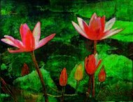 Water Lilly Digital Print by Atin Mitra,Impressionism