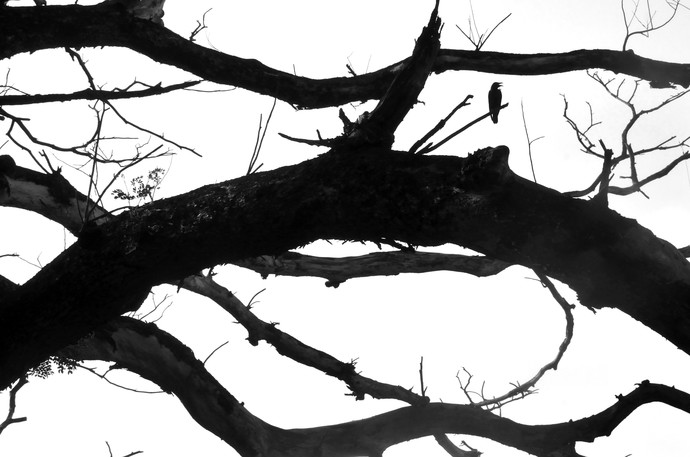 Cacophony By The Crows II by Subhajit Dutta, Image Photography, Digital Print on Paper, Gray color