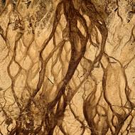 Sandscape 02 by CR Shelare, Image Photograph, Digital Print on Canvas, Brown color