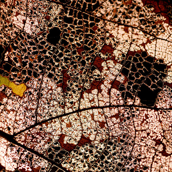 Configuration 07 by CR Shelare, Image Photograph, Digital Print on Paper, Brown color