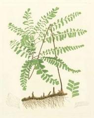 Eaton Ferns II Digital Print by Eaton,Impressionism
