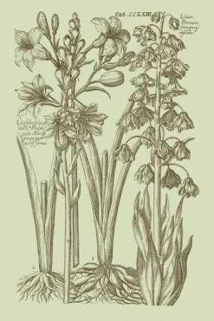 Garden of Flora II Digital Print by Vision Studio,Decorative