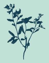 Indigo And Mint Botanical Study VII Digital Print by Vision Studio,Decorative