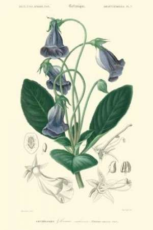 Embellished Floral Botanique I Digital Print by D'Orbigny, N.Charles,Realism