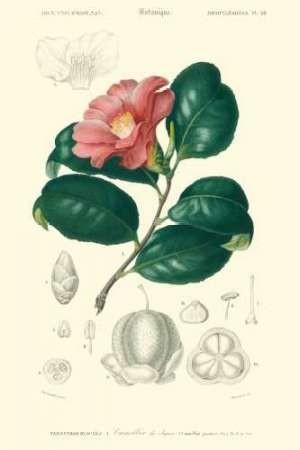 Embellished Floral Botanique II Digital Print by D'Orbigny, N.Charles,Realism