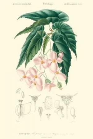 Embellished Floral Botanique III Digital Print by D'Orbigny, N.Charles,Realism