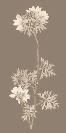 Taupe Nature Study II Digital Print by Vision Studio,Impressionism
