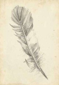 Feather Sketch I Digital Print by Harper, Ethan,Illustration