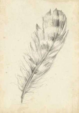 Feather Sketch II Digital Print by Harper, Ethan,Illustration