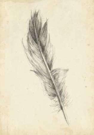 Feather Sketch IV Digital Print by Harper, Ethan,Illustration
