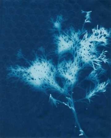 Cyanotype No.3 Digital Print by Stramel, Renee W.,Decorative