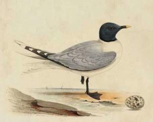 Meyer Shorebirds I Digital Print by Meyer, H.L.,Decorative
