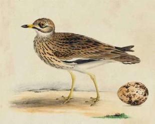 Meyer Shorebirds IV Digital Print by Meyer, H.L.,Decorative