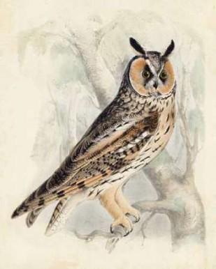 Meyer Long-Eared Owl Digital Print by Meyer, H.L.,Decorative