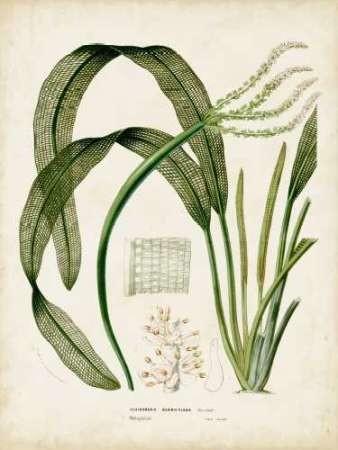 Tropical Grass I Digital Print by Vision Studio,Decorative
