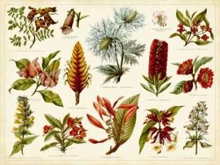 Tropical Botany Chart I Digital Print by Meyers,Decorative