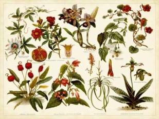 Tropical Botany Chart II Digital Print by Meyers,Decorative