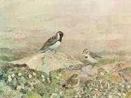 Gathering Digital Print by Sutton, George,Impressionism