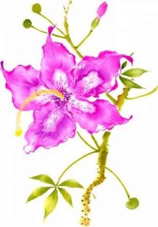 Hibiscus Flower I Digital Print by Rae, Nan,Decorative