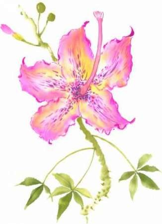 Hibiscus Flower IV Digital Print by Rae, Nan,Decorative