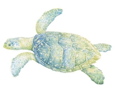 Tranquil Sea Turtle II Digital Print by Meagher, Megan,Impressionism