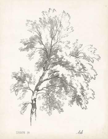 Ash Tree Study Digital Print by Unknown,Decorative
