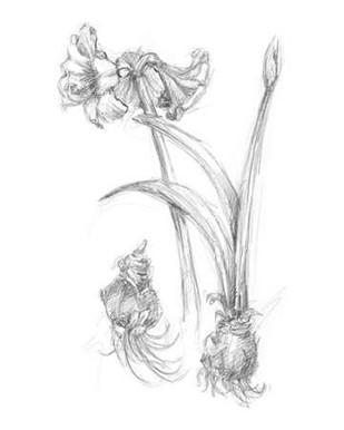 Botanical Sketch IV Digital Print by Harper, Ethan,Illustration