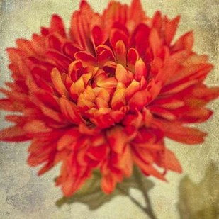 Lush Vintage Florals III Digital Print by Malek, Honey,Impressionism