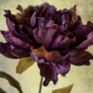 Lush Vintage Florals IV Digital Print by Malek, Honey,Impressionism