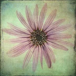 Lush Vintage Florals VIII Digital Print by Malek, Honey,Decorative