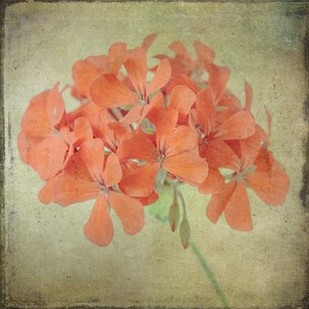 Lush Vintage Florals IX Digital Print by Malek, Honey,Decorative