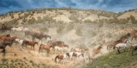 Moving the Herd Digital Print by PHBurchett,Impressionism