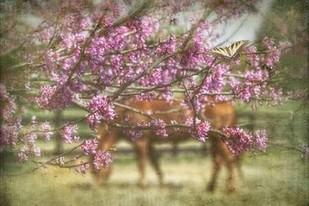 Spring has Sprung Digital Print by PHBurchett,Impressionism