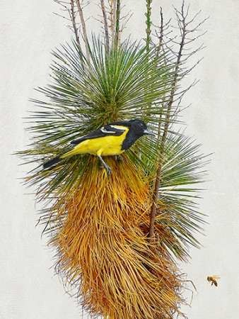 Avian Tropics II Digital Print by Vest, Chris,Decorative