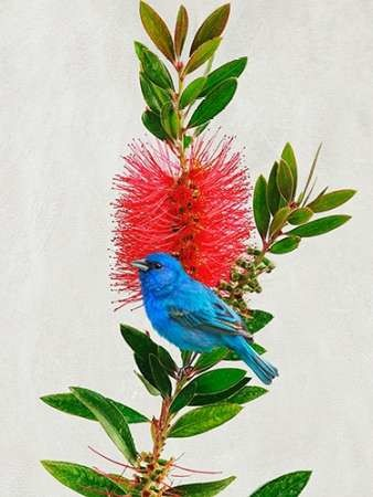 Avian Tropics III Digital Print by Vest, Chris,Decorative