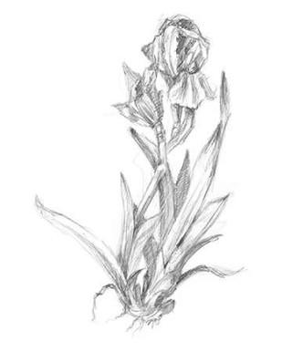 Botanical Sketch VI Digital Print by Harper, Ethan,Illustration