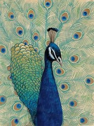 Blue Peacock I Digital Print by O'Toole, Tim,Impressionism