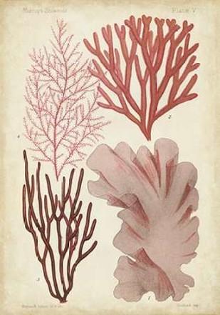 Seaweed Specimen in Coral III Digital Print by Vision Studio,Illustration