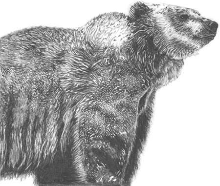 Wildlife Snapshot- Grizzly Digital Print by McCavitt, Naomi,Illustration
