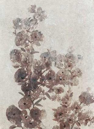 Sepia Flower Study I Digital Print by O'Toole, Tim,Decorative
