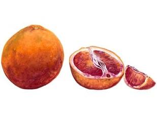 Watercolor Blood Orange Digital Print by Willett, Michael,Realism