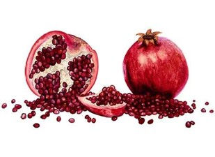 Watercolor Pomegranate Digital Print by Willett, Michael,Realism