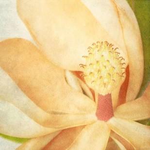 Vintage Magnolia II Digital Print by Malek, Honey,Decorative