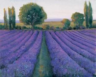Lavender Field II Digital Print by O'Toole, Tim,Impressionism