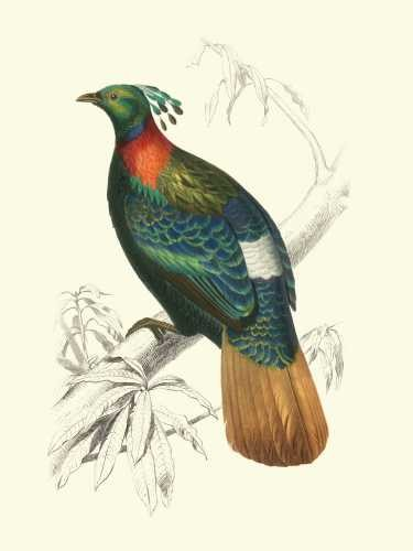 Birds of Costa Rica II Digital Print by D'Orbigny, M.Charles,Realism