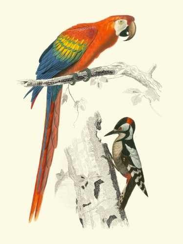 Birds of Costa Rica III Digital Print by D'Orbigny, M.Charles,Realism