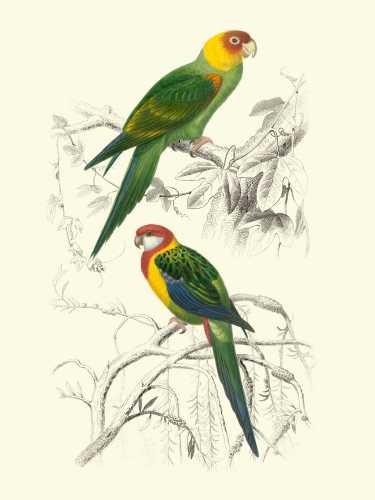 Birds of Costa Rica IV Digital Print by D'Orbigny, M.Charles,Realism