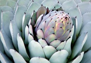 Aloe 2 Digital Print by PhotoDF,Realism