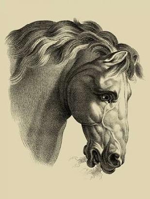 Equestrian Portrait IV Digital Print by Vision Studio,Realism